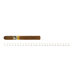 Cohiba Siglo II 5 Cigars